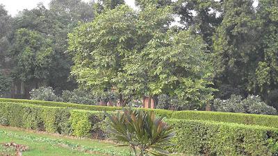 Old Fort Delhi India 907