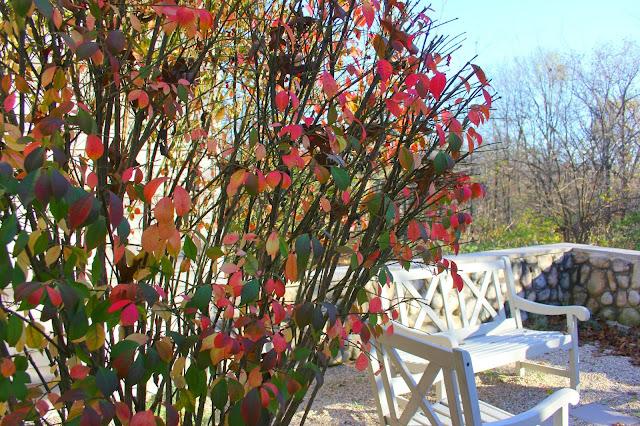 hello lovely-burning bush-courtyard