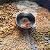 Metkoot ( Traditional maharashtrian recipe )