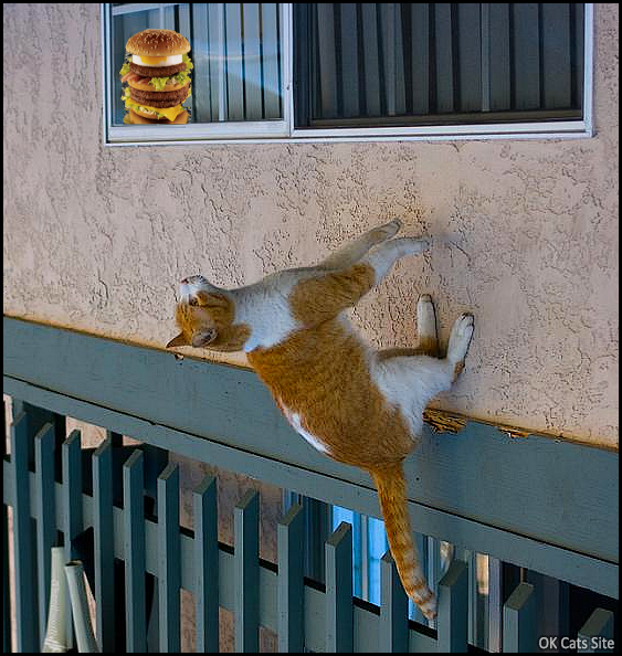 Photoshopped Cat picture • When your spider cat is addicted to triple cheeseburgers. DO WANT! [ok-cats-site.com]