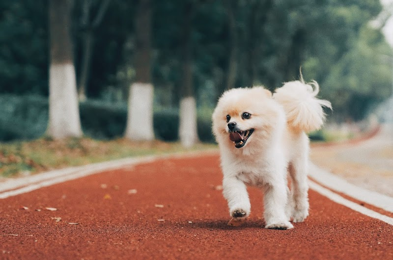 Top 10 Most Expensive Dogs In The World That You Should Know