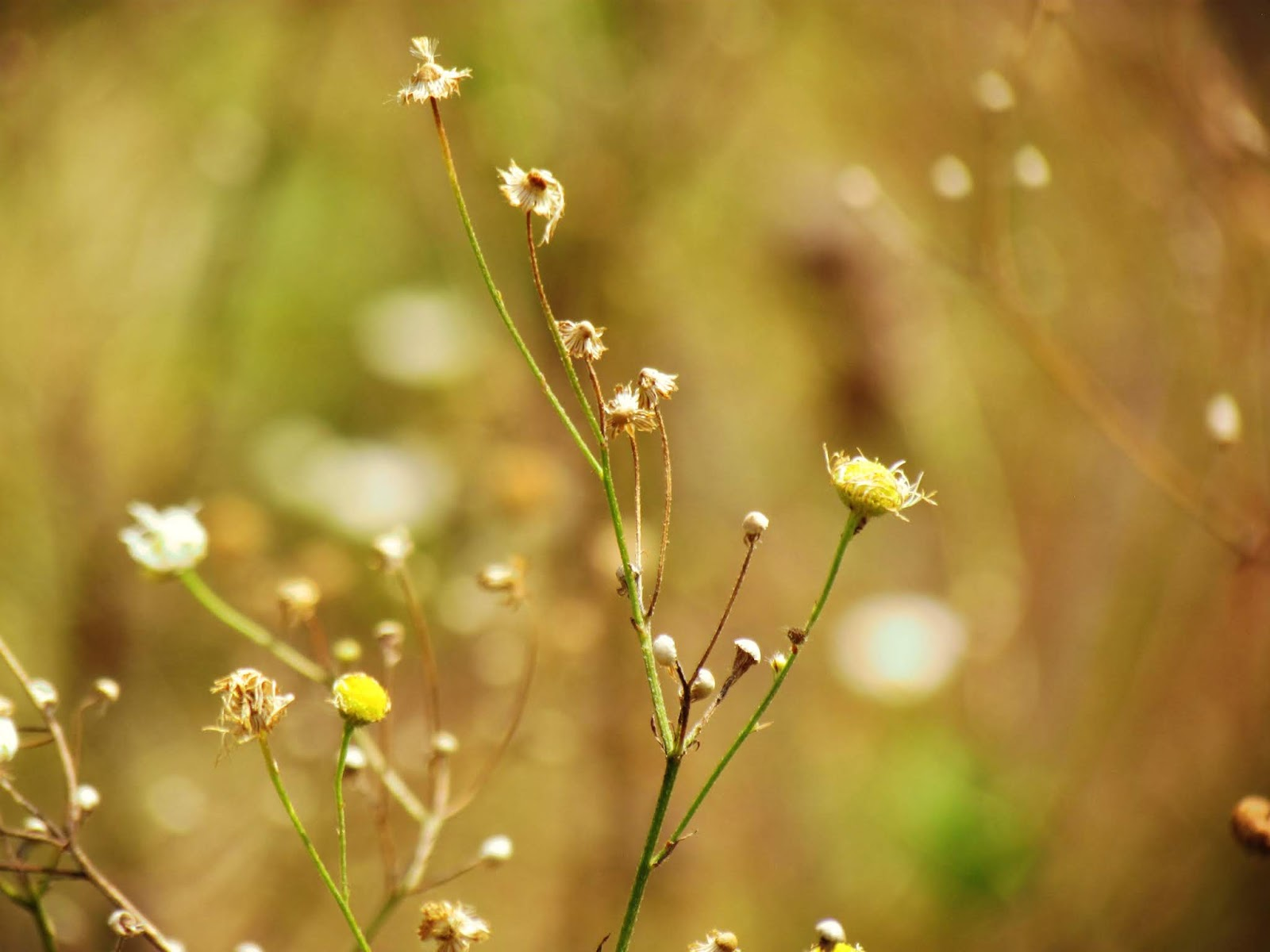 A meadow of wildflowers bathed in golden light with bees