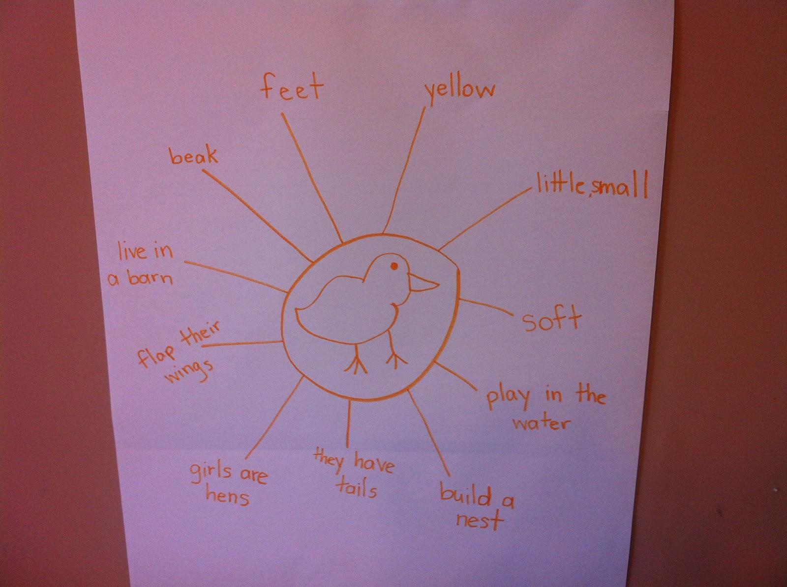 Incu Buy Hatching Chicken Eggs Classroom