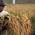 Yang tak Adil bagi Petani