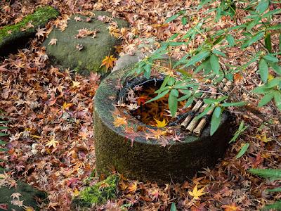 Fallen leaves: Engaku-ji
