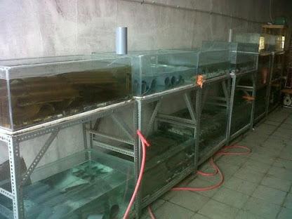 Aquarium lobster air tawar