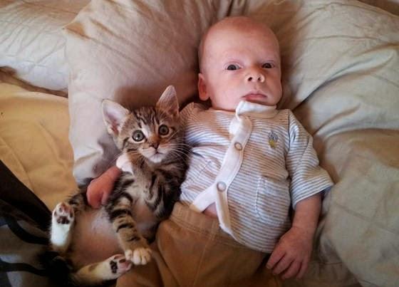 Une Photo chat avec Bébé