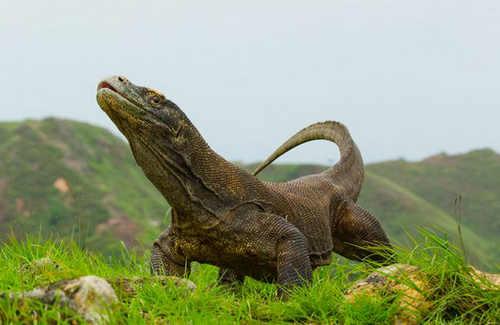 Pengertian Hewan Vertebrata Dan Contohnya Beserta Klasifikasinya