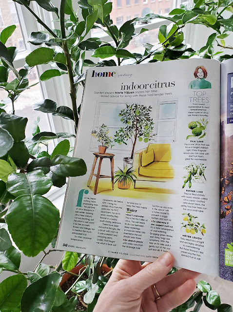 Magazine article about citrus trees