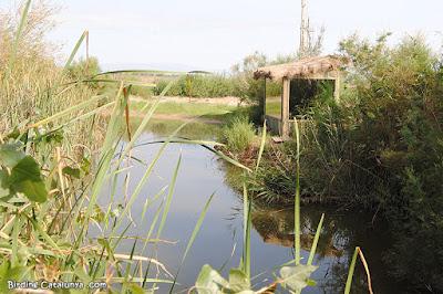 Uno de los hides del estanque