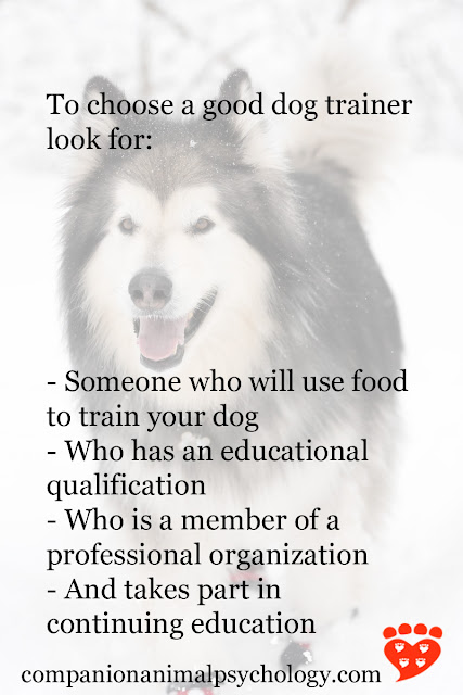 How to choose a dog trainer: A summary of what to look for