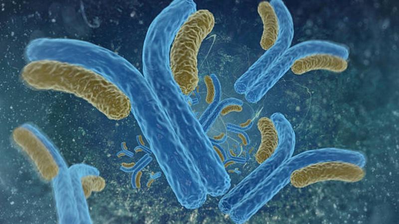 Functional Antibodies