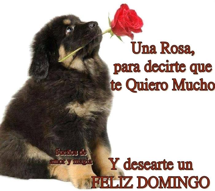 rosa Feliz Domingo
