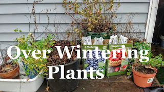 Overwintering and Tree Tapping