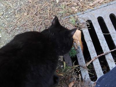 Foto van een poes die ik onderweg tegenkwam. Hij snuffelt aan een putdeksel.