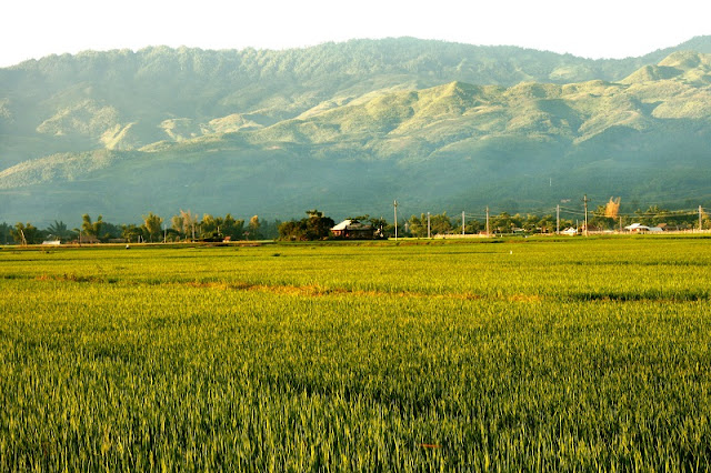 October! Dating Muong Lo Rice Valley 1