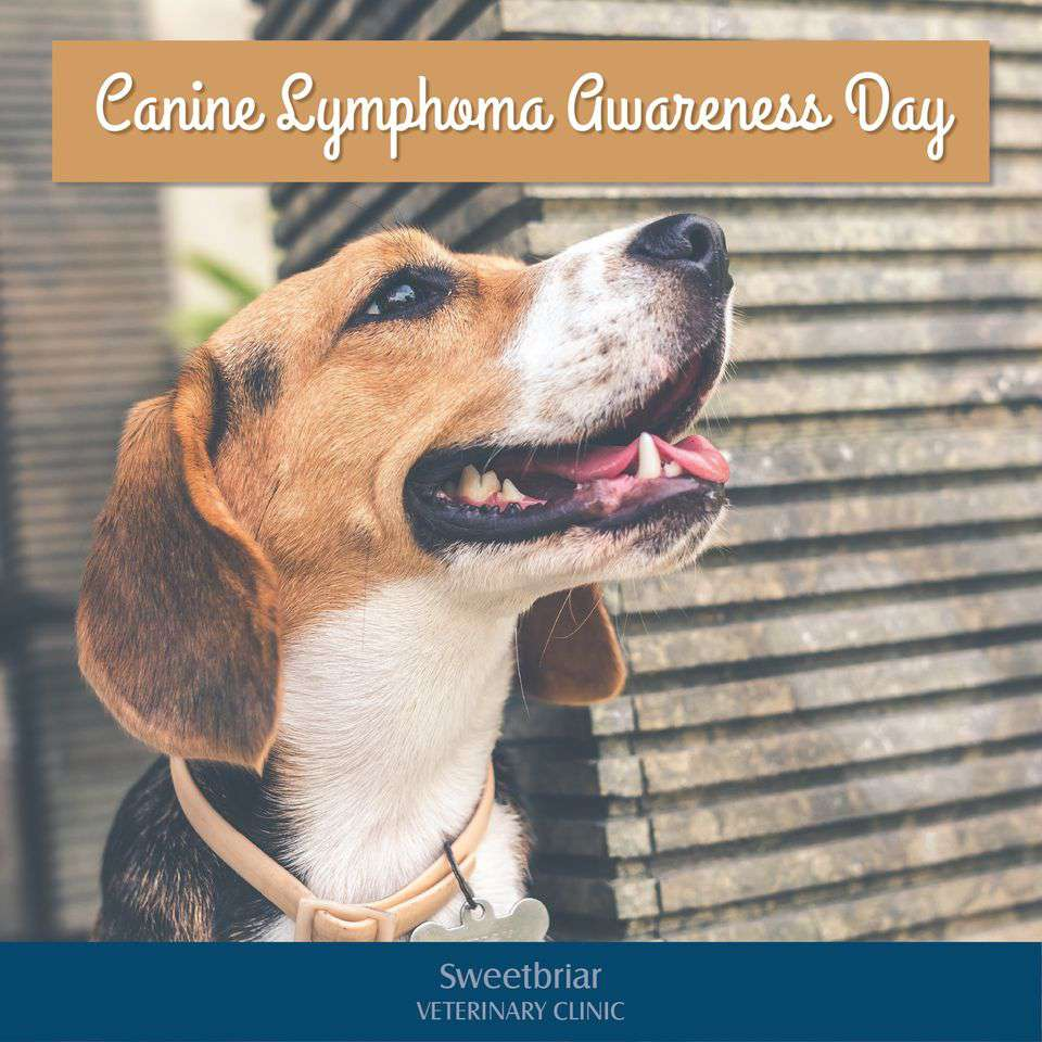 National Canine Lymphoma Awareness Day Wishes