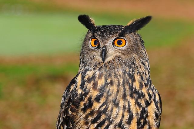 Mengenal Burung Hantu Lebih Dekat