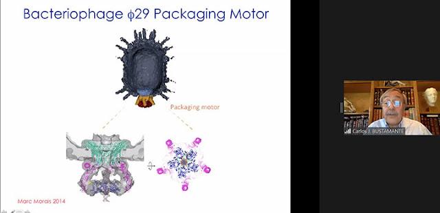 Bacteriophage packaging motor  (Source: Carlos Bustamante, UCB, at APS Far West 2020 meeting)