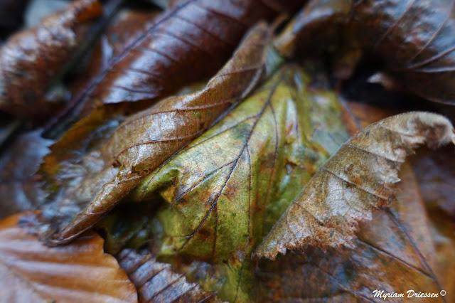 feuilles d'automne autumn leaves