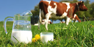 wajib tau Inilah Negara Penghasil Susu Ternama di Dunia