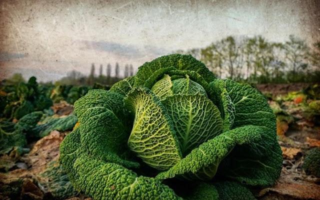 Bibit tanaman, pembasmi hama, tanaman hidroponik
