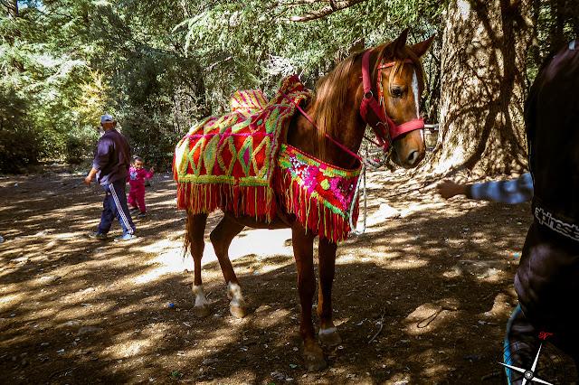 caballo atraccion bosque de Azrou