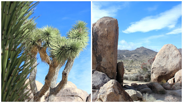 Joshua Tree/ Palm Springs- colourful travel diary, where to eat, what to do,