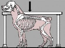 coluna dos cães