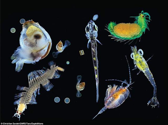 thuỷ sinh phù du trong biển
