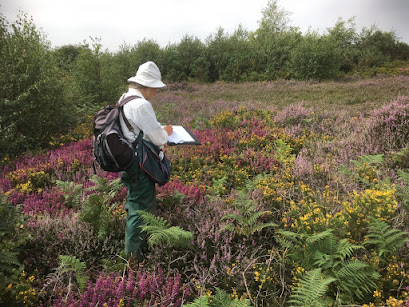 Hilary Ash surveying the heathland at Heswall Dales