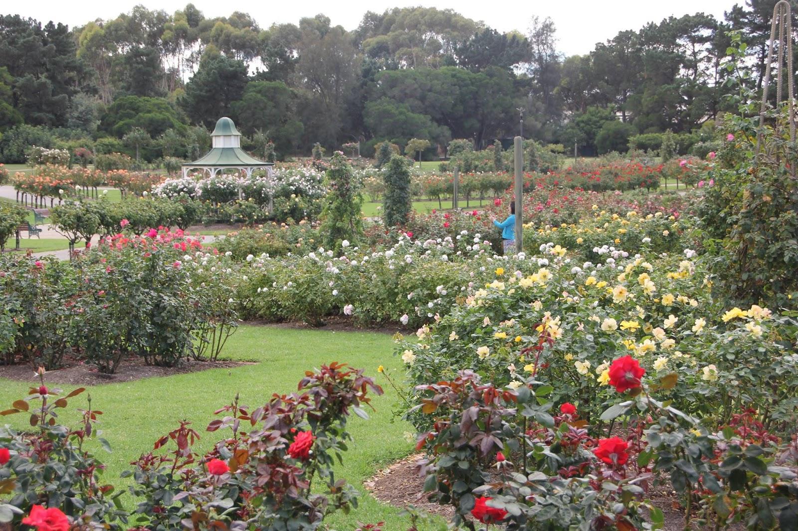 Coffs Harbour Garden Club: State Rose Garden Werribee Park on