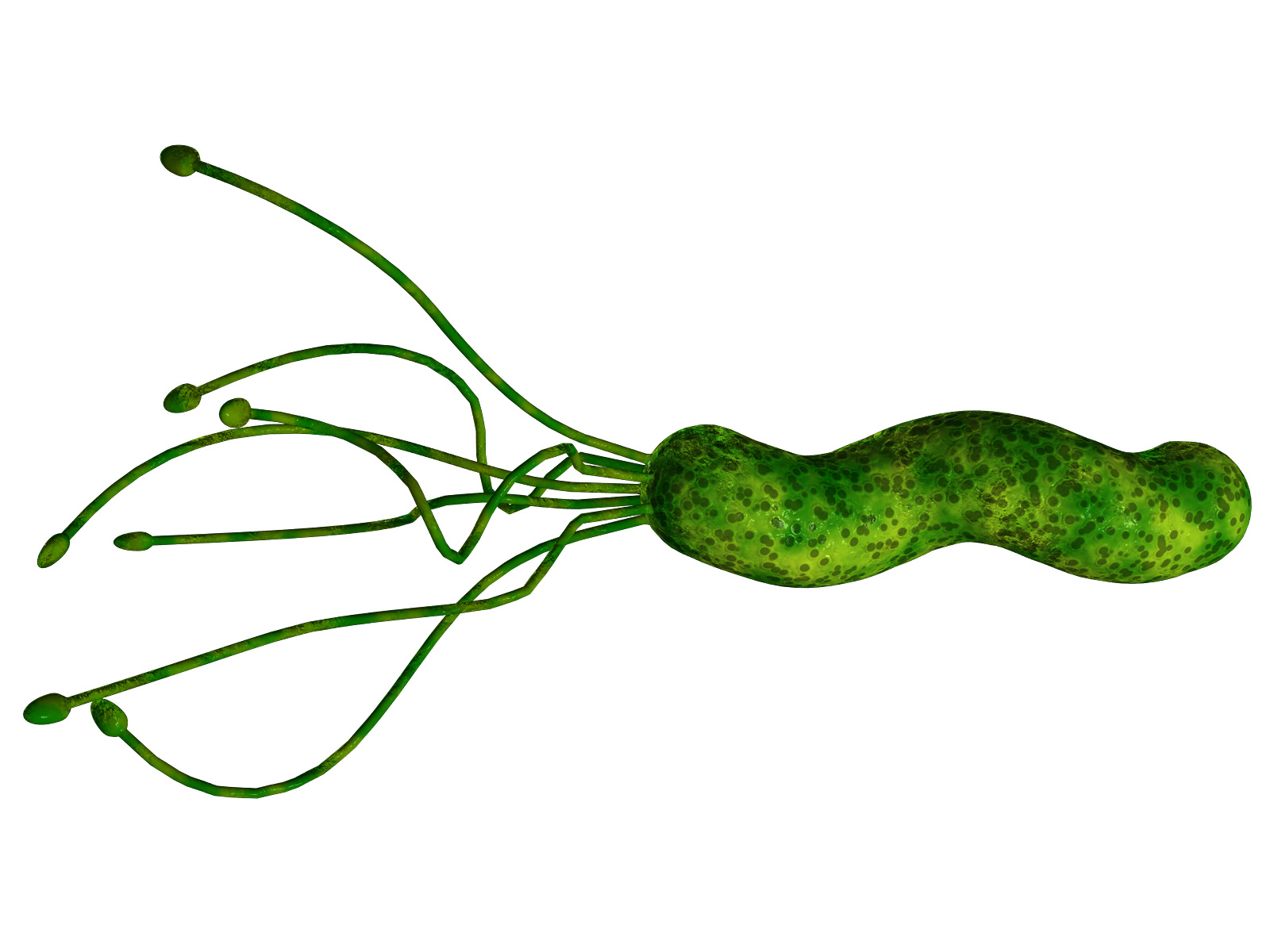 E Pylori Natural Treatment