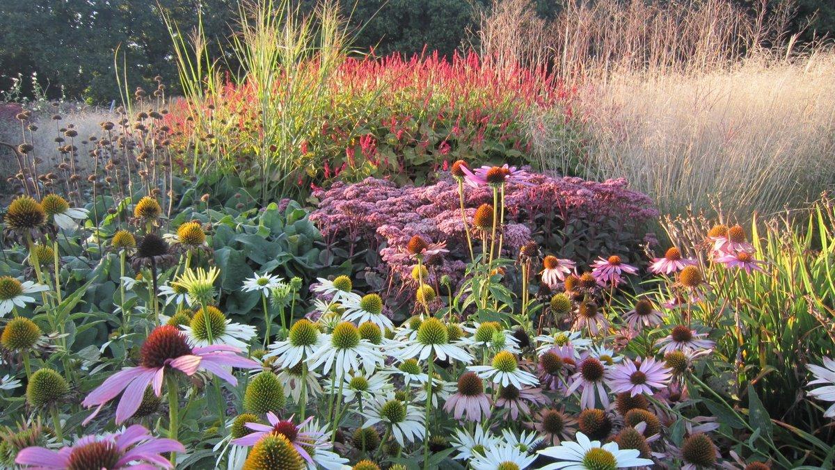 Borduras de jardin con plantas vivaces de flor estival