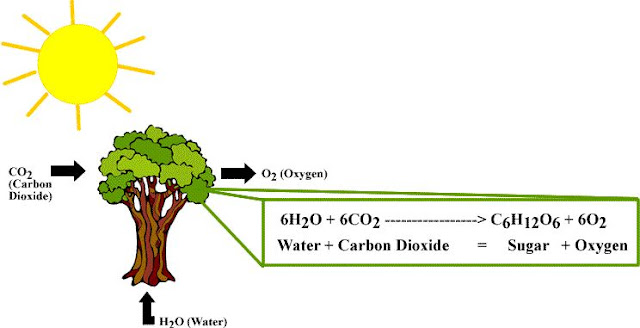 Reaksi Kimia Fotosintesis dan Jenis-jenis Reaksi Kimia