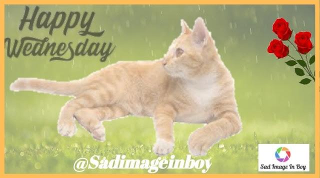 Happy Wednesday images | happy wednesday meme, wednesday morning image, wednesday pictures, happy wednesday images