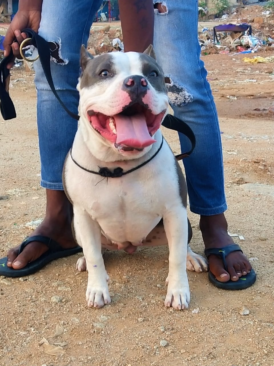 Top Dog Breeders in Bangalore India at Best Price
