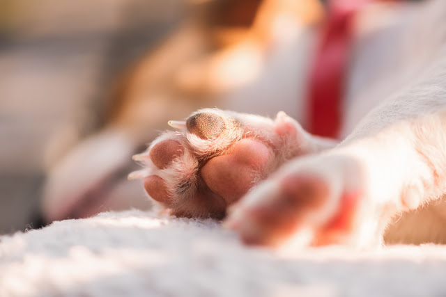 Companion Animal Psychology's posts of the year. Photo shows puppy toe beans.