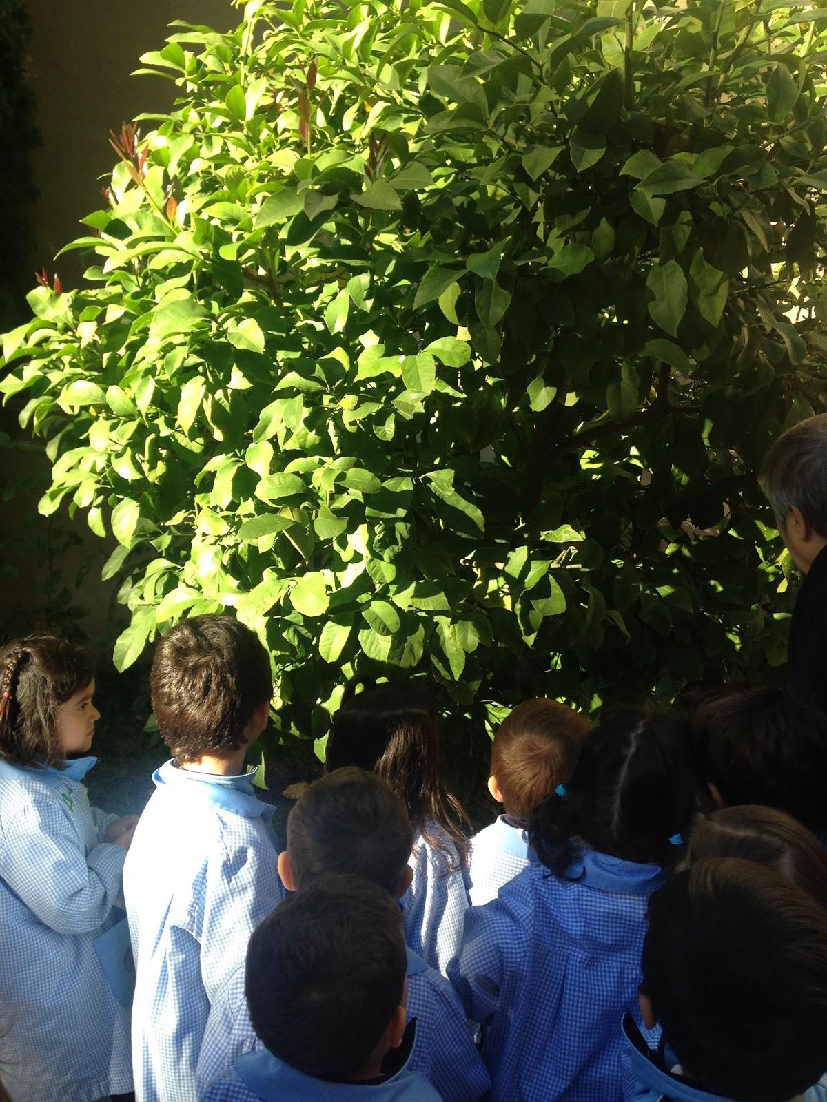 El tic tac de infantil rboles de hoja caduca y rboles for Como se llaman los arboles que no pierden sus hojas