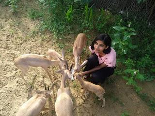 पूजा बिश्नोई हिरणों को दाना खिलाती हुई
