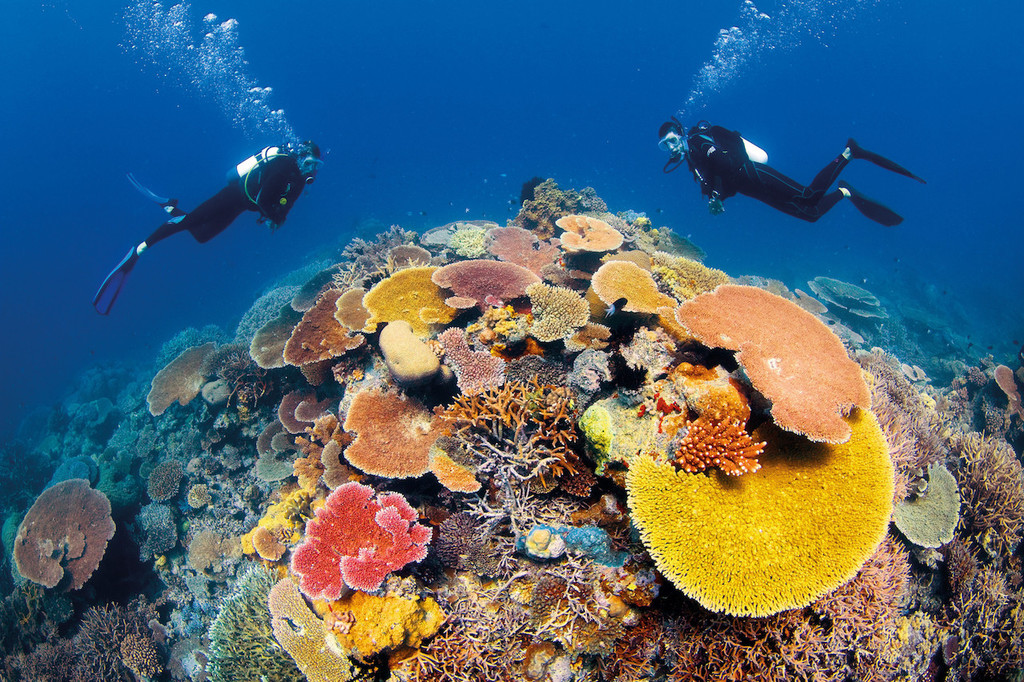 Scuba Diving Great Barrier Reef, Australia