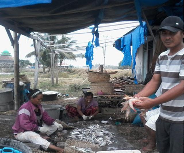Nelayan memilih udang