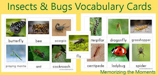Free Printable Montessori 3 Part Vocabulary Cards for Insects and Bugs