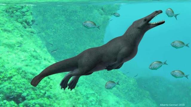Περού: Τετράποδη φάλαινα περπατούσε στην ξηρά και κολυμπούσε στη θάλασσα πριν από 43 εκατ. χρόνια