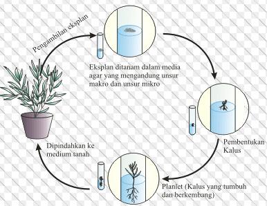 Soal dan Pembahasan Biologi SNMPTN 2012 231 ~ MATERI DAN ...
