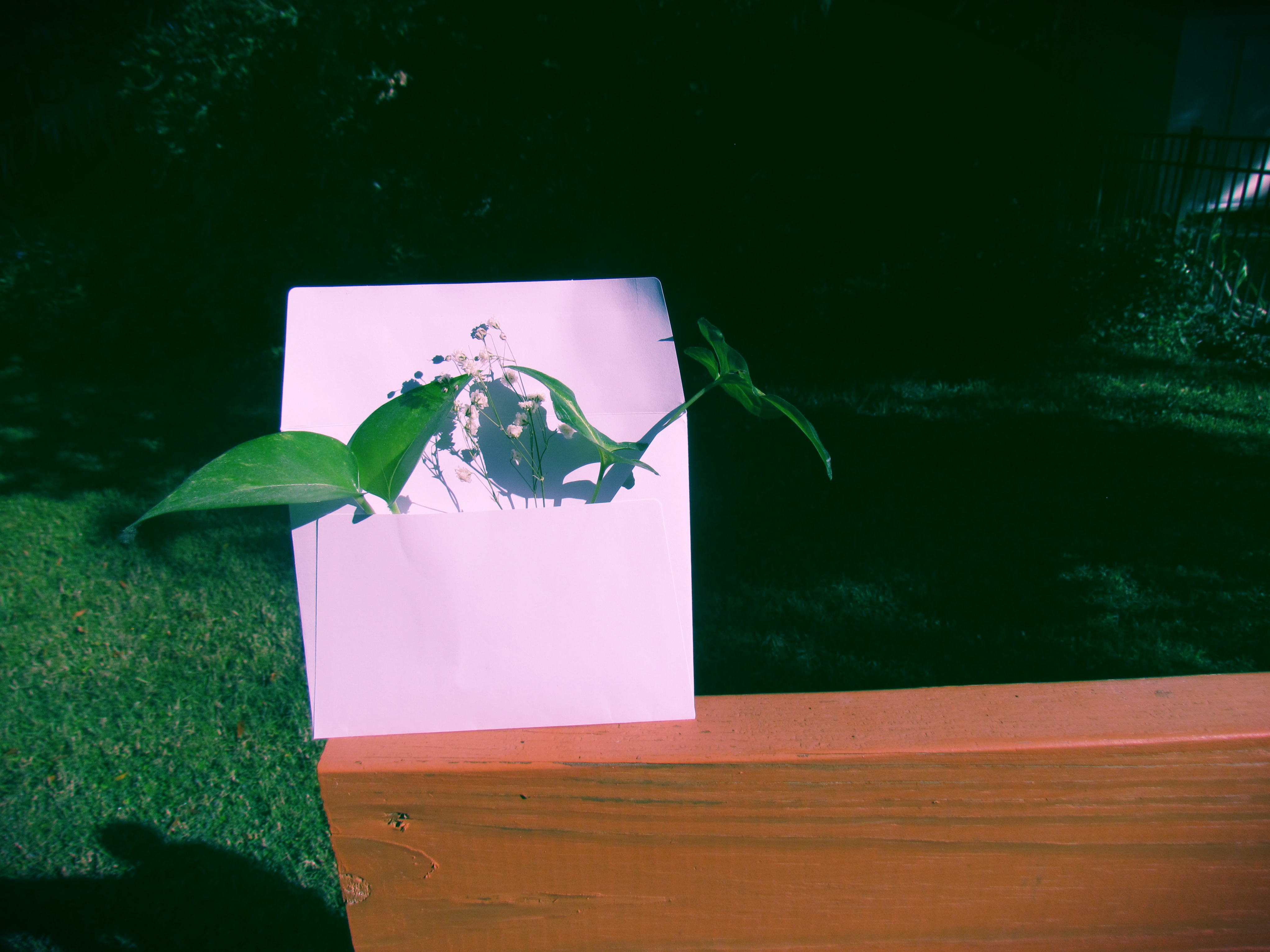 A golden pothos plant cutting in an envelope in the backyard of a Florida backyard in a tiny, seaside fishing village