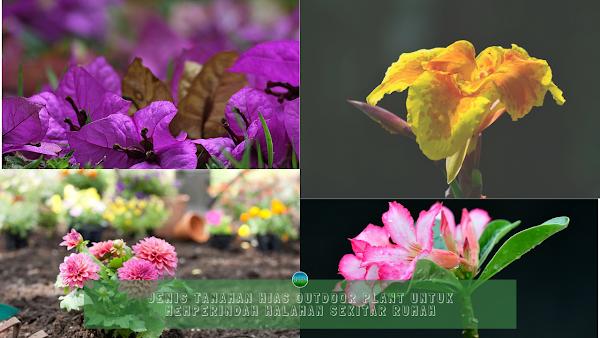 Jenis Tanaman Hias Outdoor Plant Untuk Memperindah Halaman Sekitar Rumah