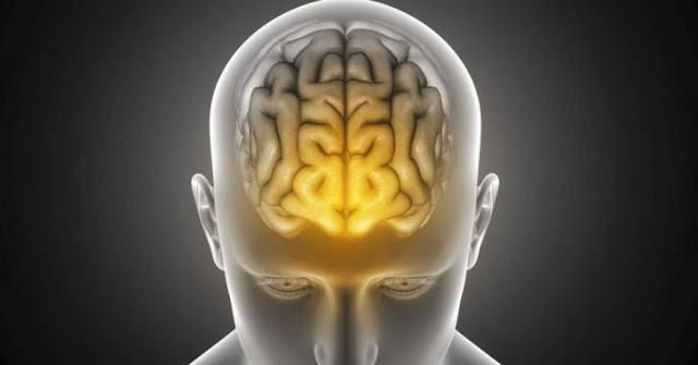 Fakta-fakta tentang otak manusia