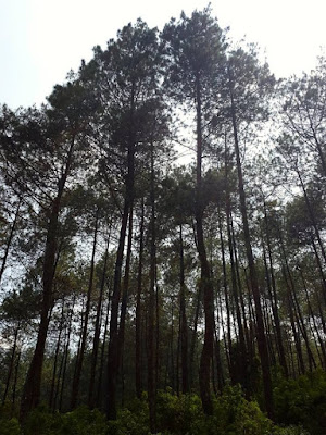 Guci Bamboo Forest Tegal Indonesia