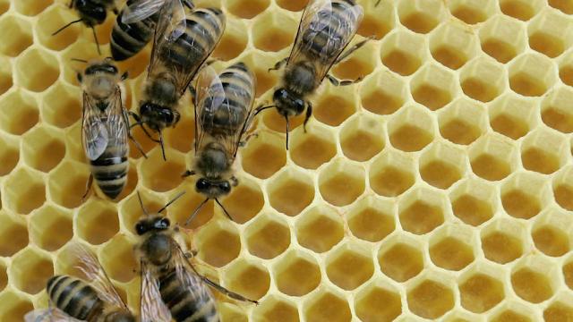 Scientists Train Bees To Identify Coronavirus